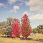 Autumn at Bendemeer